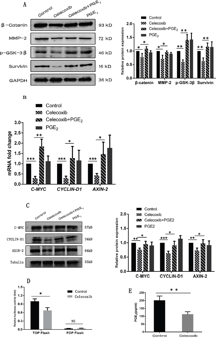 Celecoxib down-regulates the Wnt pathway activity by inhibiting the synthesis of PGE2 and reducing the phosphorylation of GSK-3β.