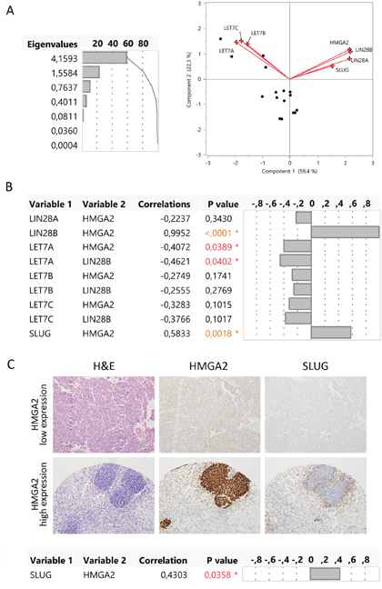 HMGA2 correlated with LIN28B, LET-7A, and SLUG gene expression in the blastemal WT component.