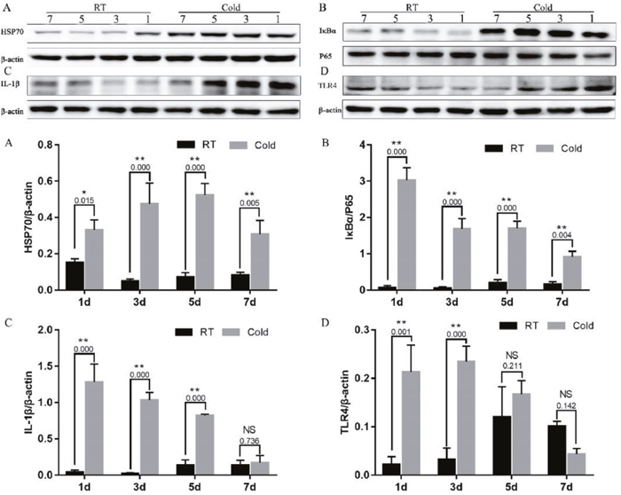 Impact of prenatal cold stress on the activation of the HSP70/TLR4/NF-κB signaling pathway in placenta.