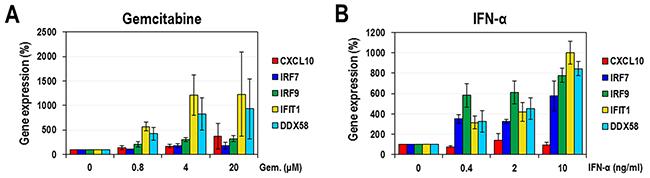 The effect of gemcitabine on ISGs.