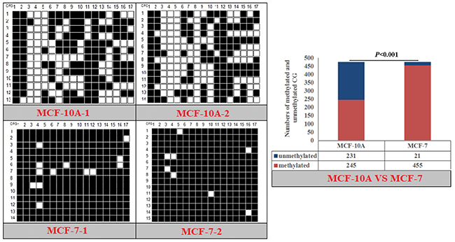 Methylation patterns and significant difference of human PPARα-P1 CpG island of between MXF-10A and MCF7.