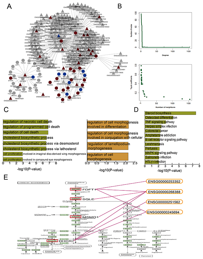 DHA-related mRNA-lncRNA network and functional analysis.