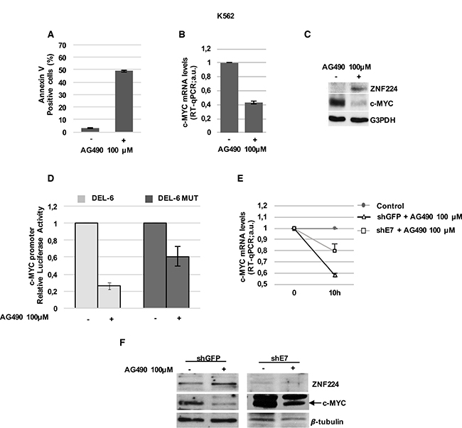 ZNF224 mediates AG490-dependent transcriptional repression on c-Myc.