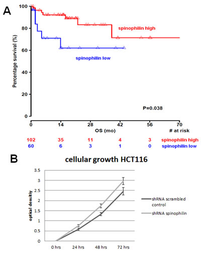 Spinophilin expression and influence on survival and cellular growth.