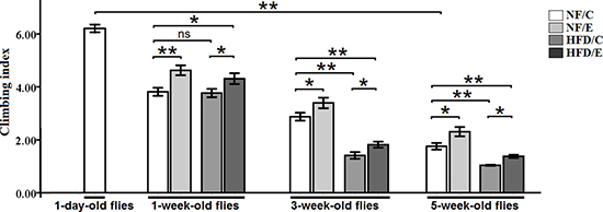 Effects of endurance training and HFD on locomotor impairment in Drosophila.