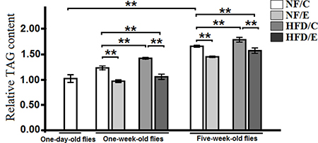 Effects of HFD and endurance training on the heart relative TAG level at one-day old flies, one-week old flies, and five-week old flies.