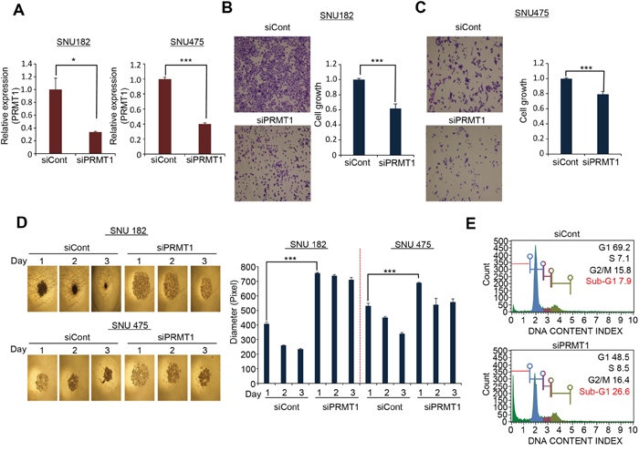 PRMT1 regulated cell growth and spheroid formation in HCC.