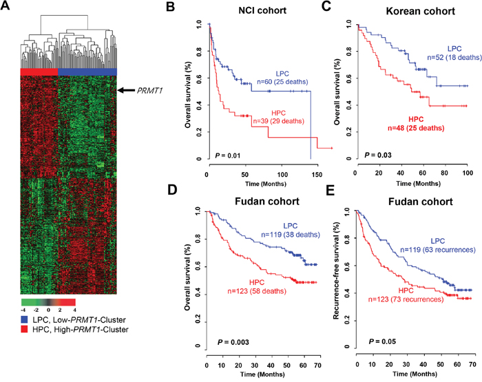Gene expression pattern of the PRMT1 signature and prognosis of two clusters in the NCI, Korean and Fudan cohorts.