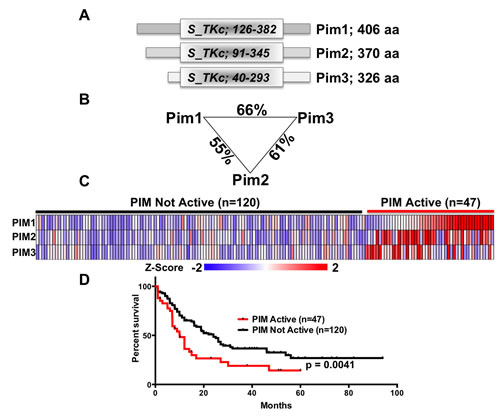 PIM kinases are a closely related family.