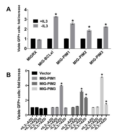 PIM-family kinases protect cells from death in vitro in a kinase dependent manner.