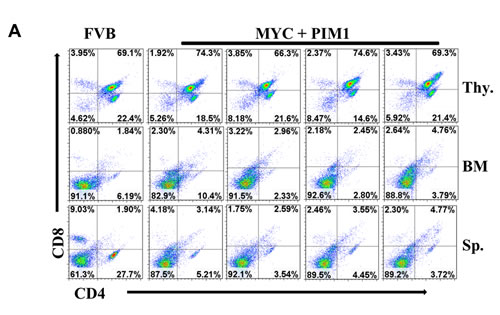 Expression of MYC and PIM1 does not affect T-cells.