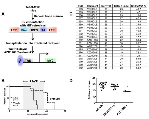 Treatment of mice expressing PIM1 and MYC with a PIM inhibitor extends life of mice.