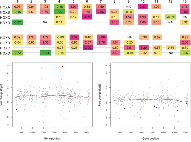 Distinct expression patterns of HOX genes and Chromosome 22 genes in pediatric and adult SEPN.