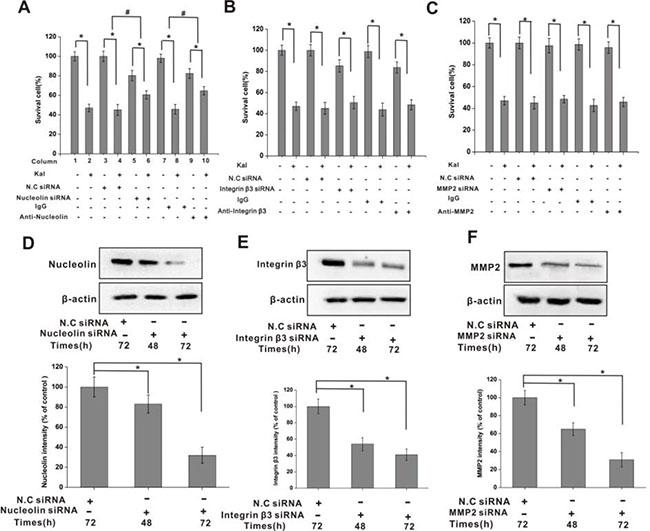 Nucleolin mediates the inhibitory effects of kallistatin on HUVECs viability.
