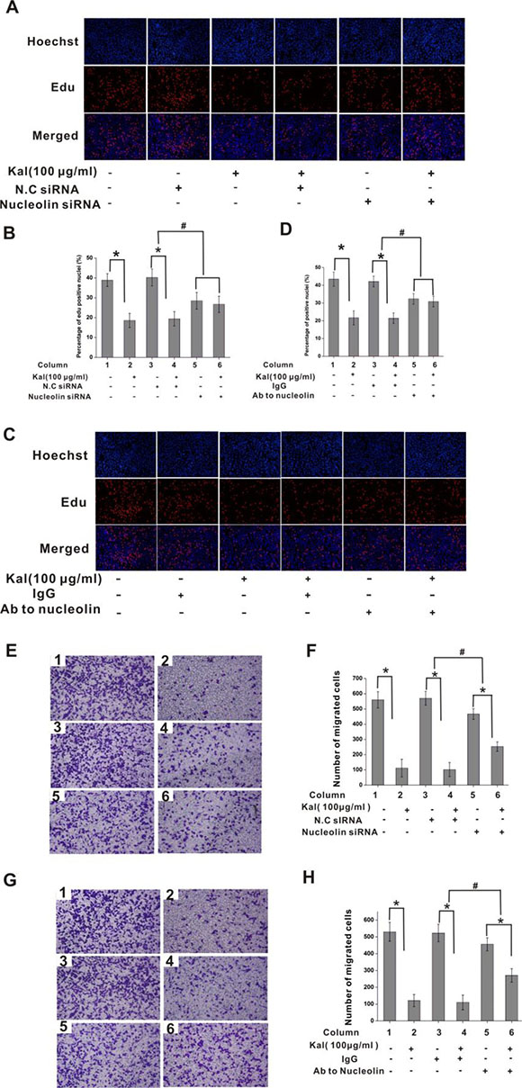 Nucleolin mediates the antiproliferative effect of kallistatin on endothelial cells.