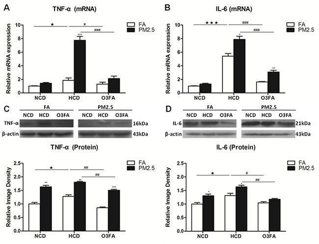Effects of PM2.5 exposure on the expression of TNF-α and IL-6 in brain microvessels.