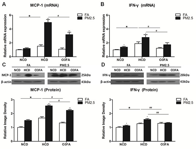Effects of PM2.5 exposure on the expression of MCP-1 and IFN-γ in brain microvessels.