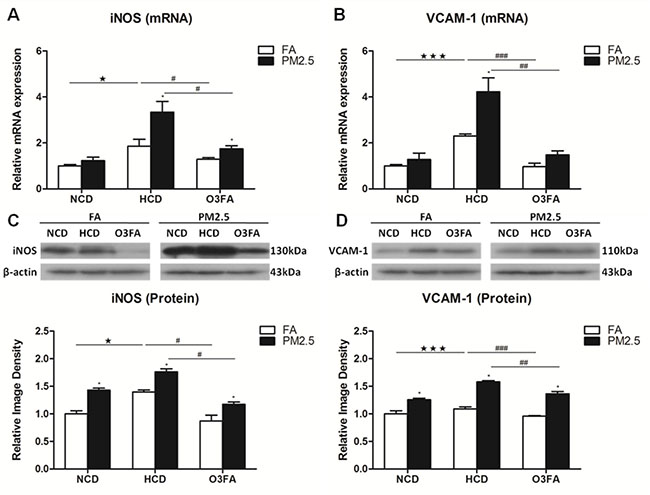 Effects of PM2.5 exposure on the expression of VCAM-1 and iNOS in brain microvessels.