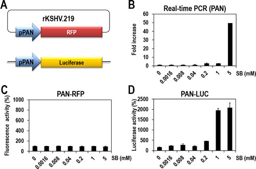 Establishment of vero-rKSHV.219/PAN-LUC cells for quantitatively measuring lytic induction of KSHV.