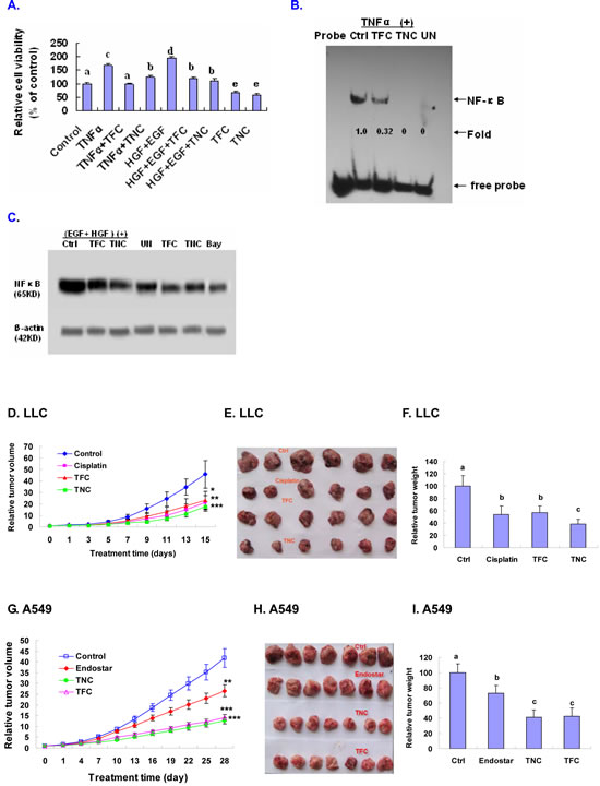 Suppression of TNFα- and EGF+HGF-enhanced growth and/or NF-κB signaling in A549 cells and in vivo inhibition of LLC and A549 xenografts tumor growth in tumor-bearing mice by TFC and TNC.