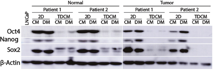 Culture conditions and effects on stem cell markers.