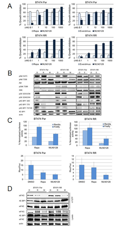 MLN0128 is effective in cell lines with acquired rapamycin resistance.