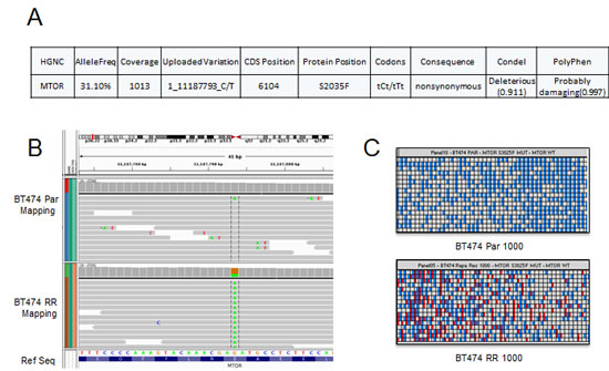 BT474 RR harbors an acquired mTOR mutation.