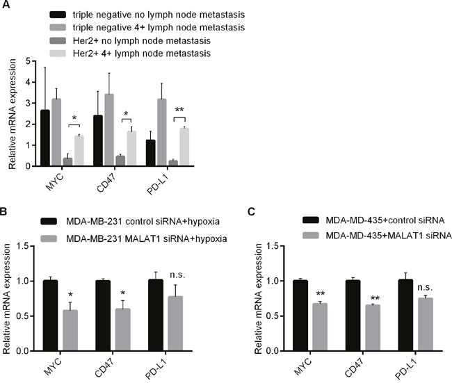 Involvement of MALAT1 in Regulating Expressions of Immune Checkpoint Genes in Above 2 Types of Breast Cancer Cells.
