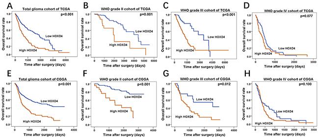Survival analysis of TCGA and CGGA glioma cases.