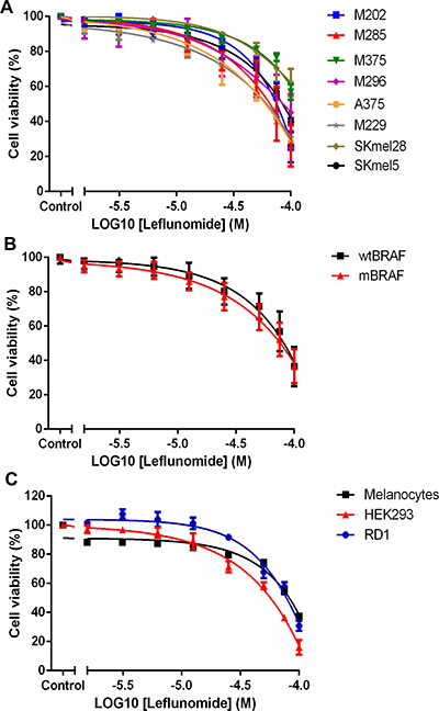 Leflunomide reduces the cell viability of melanoma cell lines.