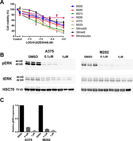 MEK inhibition reduces the viability of melanoma cells.