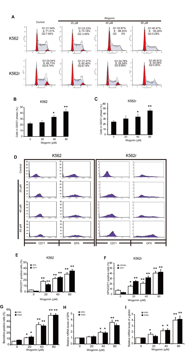 Cell cycle arrest induction and differentiation induction effects of wogonin on K562 and K562r cells.