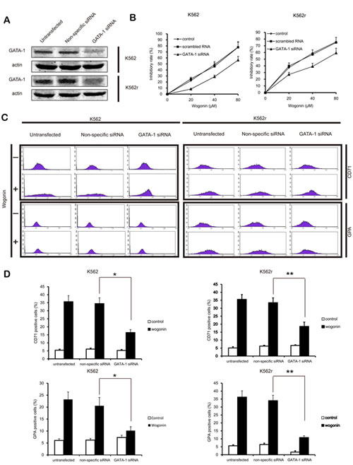 GATA-1 is involved in wogonin-modulated growth inhibition and differentiation.