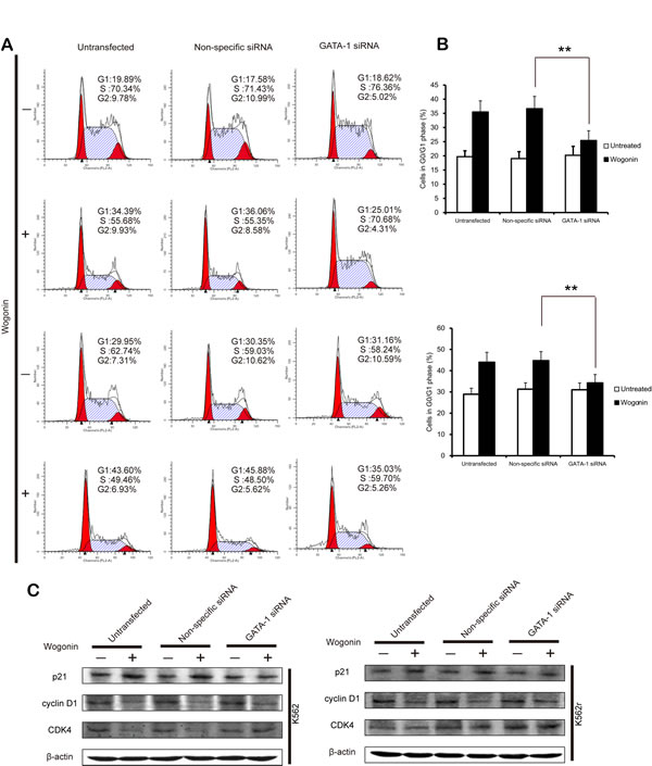 GATA-1 is involved in wogonin-modulated cycle arrest.
