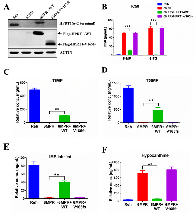 HPRT1-wt can reverse the resistance in Reh-6MPR cells.
