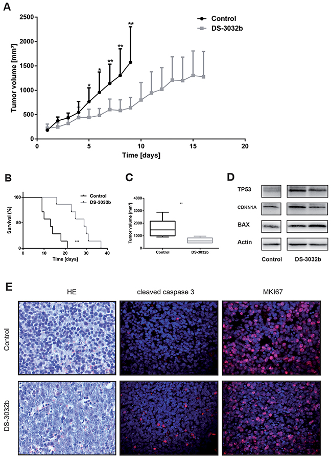 DS-3032b delays tumor growth and improves survival in mice xenografted with wildtype TP53 neuroblastoma cells.