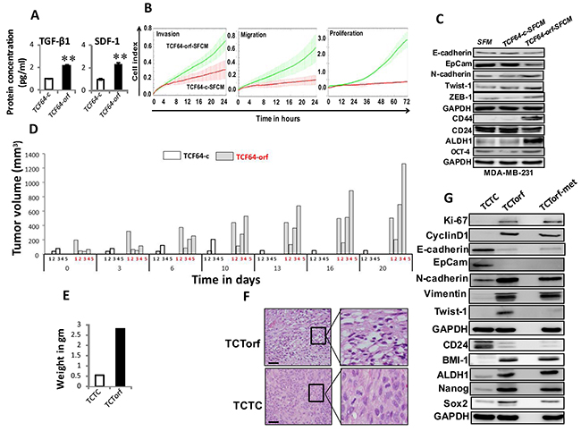 Ectopic expression of DNMT1 enhances the paracrine procarcinogenic effects of breast stromal fibroblasts in vitro and in vivo.