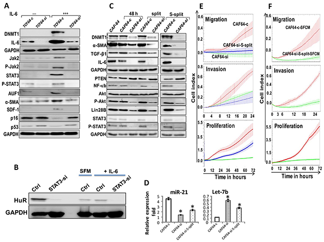 DNMTl knockdown persistently inhibits the pro-inflammatory/carcinogenic IL-6-related loop and CAF cells.