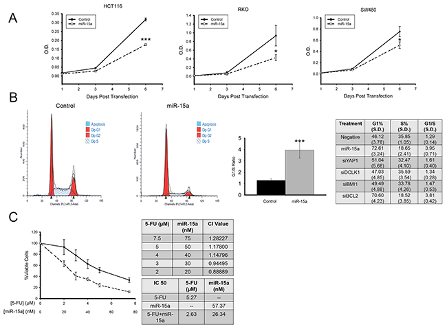 miR-15a inhibits colon cancer proliferation, and increases sensitivity to 5-Fu.
