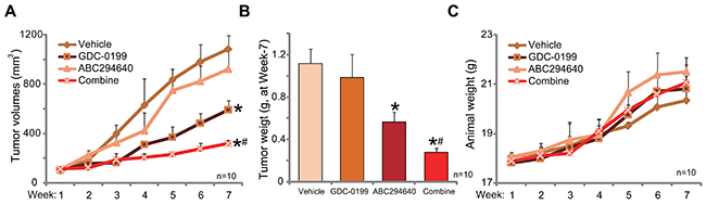 ABC294640 inhibits C33A tumor growth in nude mice, sensitized by co-administration of GDC-0199.