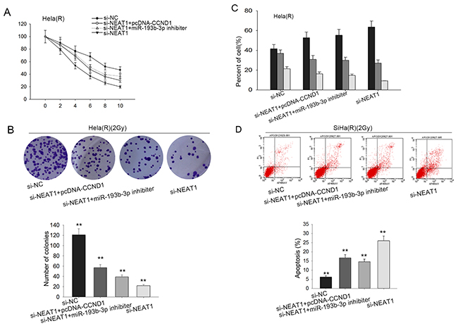 NEAT1 improves CCND1 to intensify the radio-resistance of cervical cancer through competitively sponging miR-193b-3p.