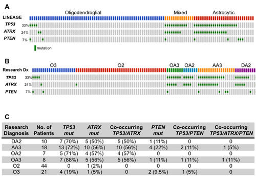 (A, B) Oncoprint diagramming