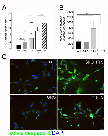 Ras inhibition increases cell death.