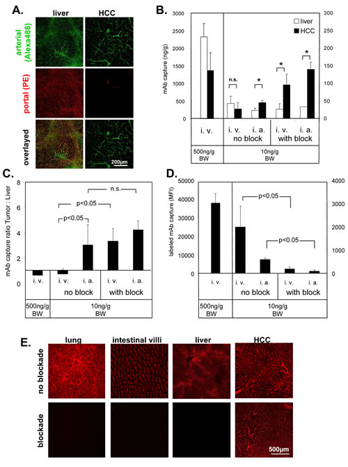Fig.3: Selective access to tumor vasculature using PE-conjugated ME-9F1 mAb.