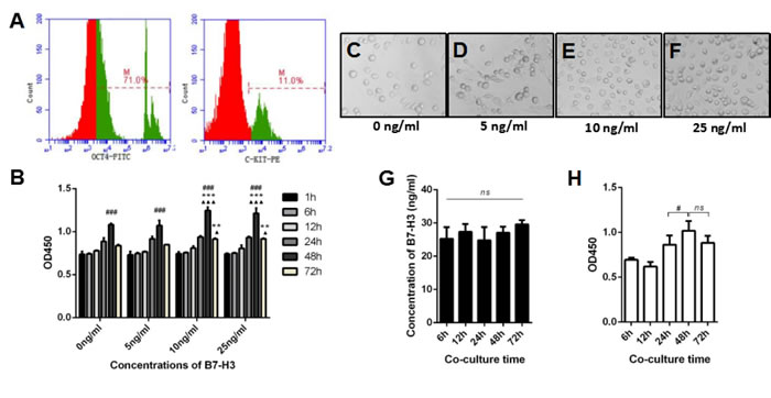 The effect of B7-H3 on mouse SSC proliferation.