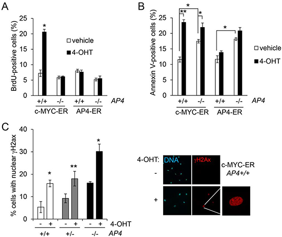 AP4 as a mediator of c-MYC function.