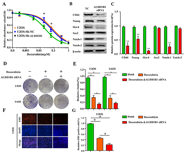 The role of ALDH1B1 in drug resistance and stemness of OS cells.
