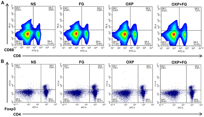OXP and FG combination promoted activated CD8+ T cells and reduced regulatory T cells.