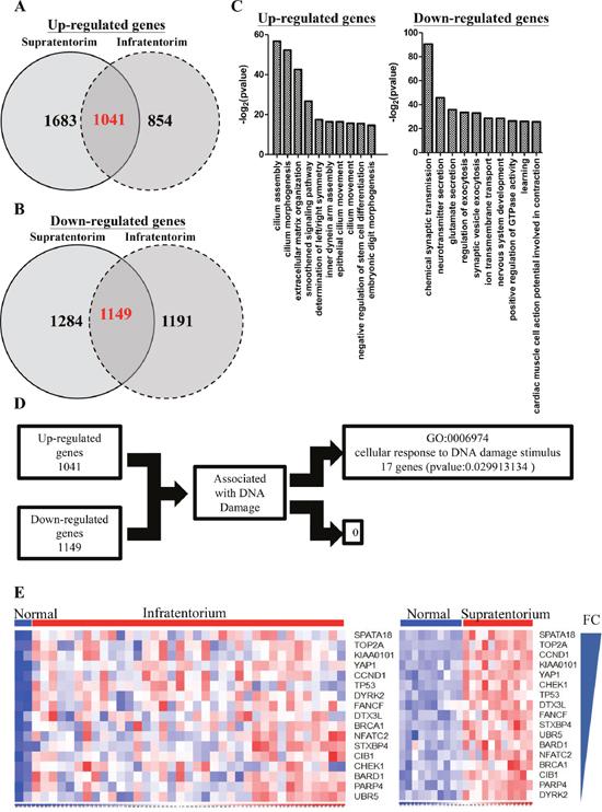 Differentiated genes in infratentorium and supratentorium ependymomas.