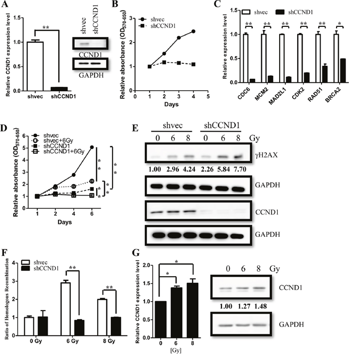 CCND1 regulate cell proliferation and DNA repair in ependymomas.